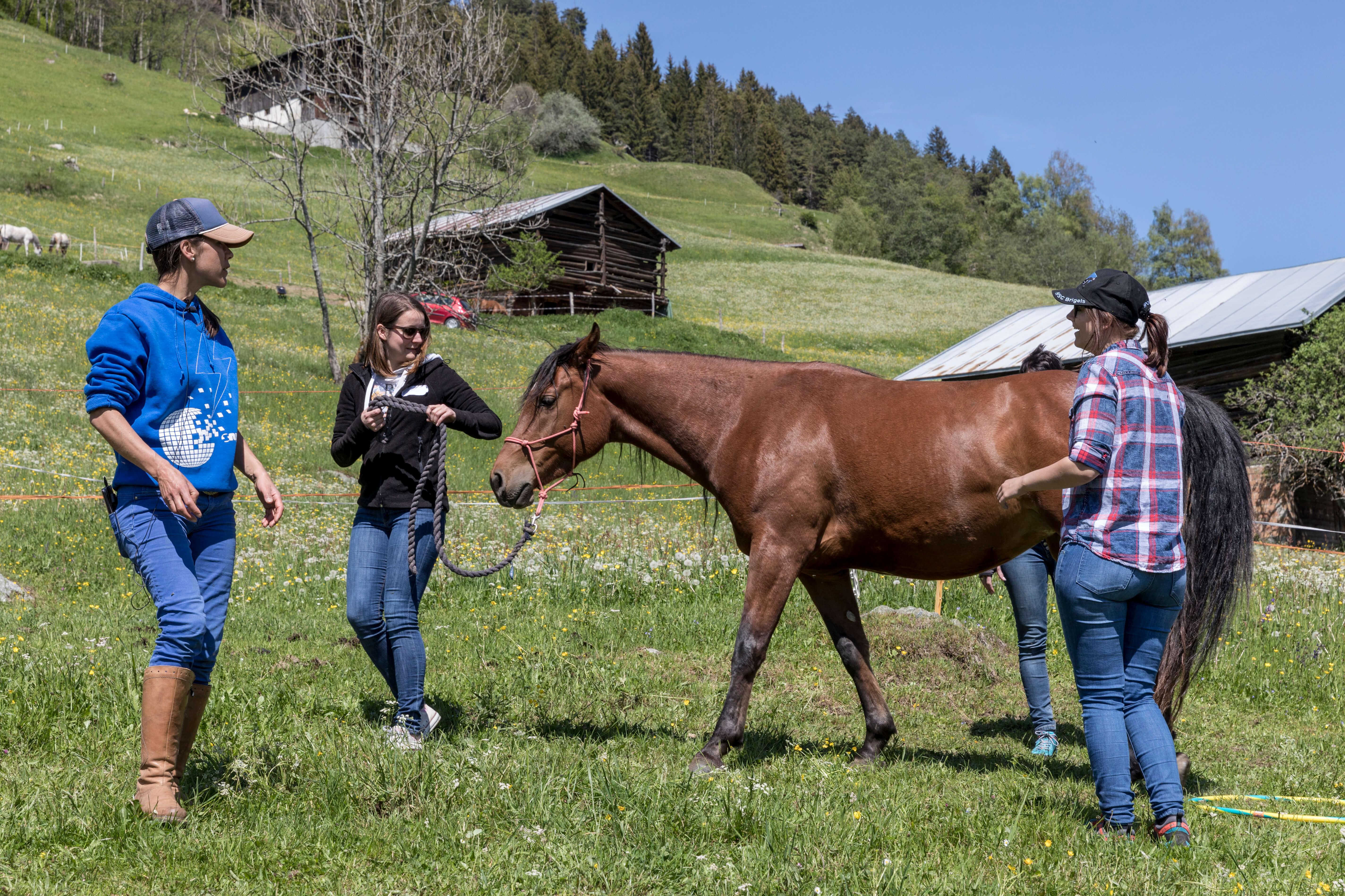 Wieso Coaching mit Pferden?