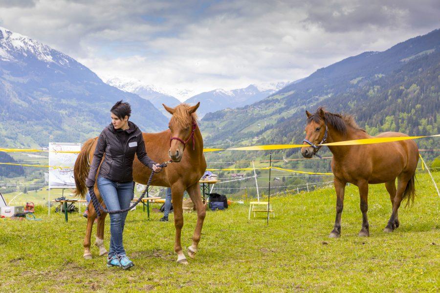 Teamentwicklung mit Pferden!           aktiv, systemisch, naturbezogen, exklusiv
